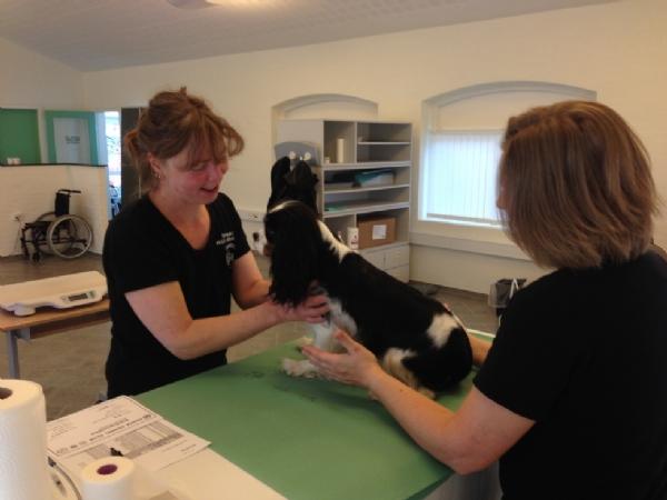 Helle og Heidi gør en hund klar til scanning. Cavalierklubbens MR-scanning 20/11-17