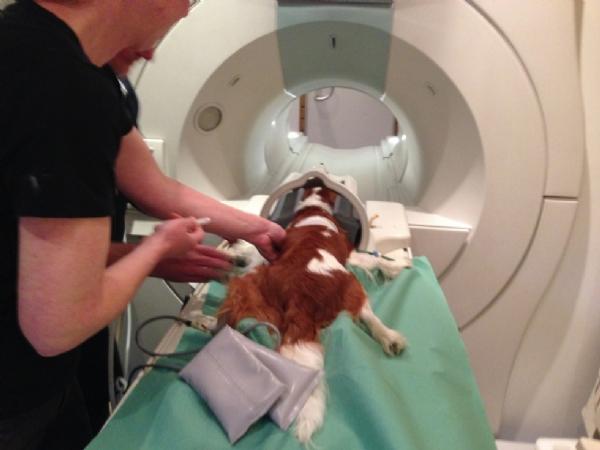 Support af hoved . Cavalierklubbens MR-scanning 20/11-17