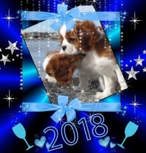 Godt Nytår fra Cavalierklubbens bestyrelse